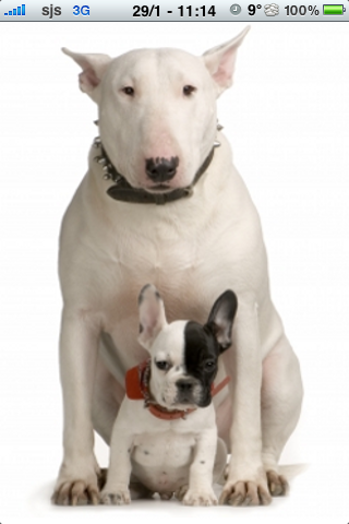 Bull Terrier with a puppy Slide Puzzle screenshot #1