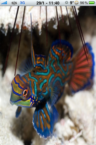Tropical Fish Slide Puzzle screenshot #1