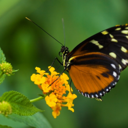 Tropical Butterfly Slide Puzzle