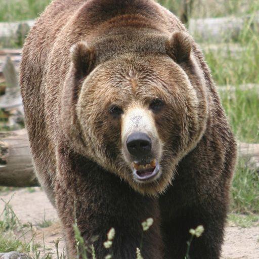 SlidePuzzle - Bear