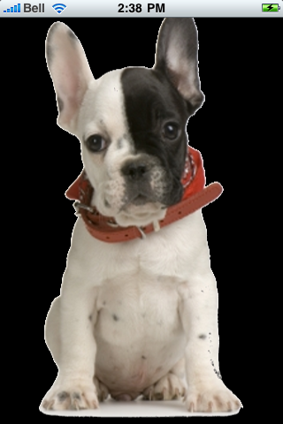 French Bulldog Snow Globe screenshot #1