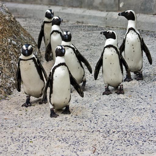 Antarctica Study Guide