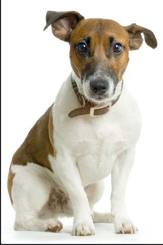SlidePuzzle - Jack Russel Terrier screenshot #3