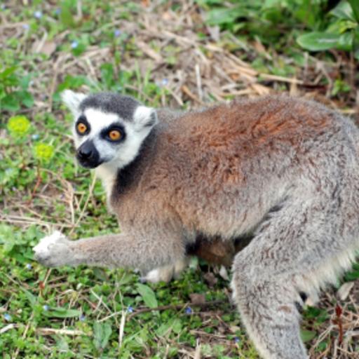 Lemur Slide Puzzle