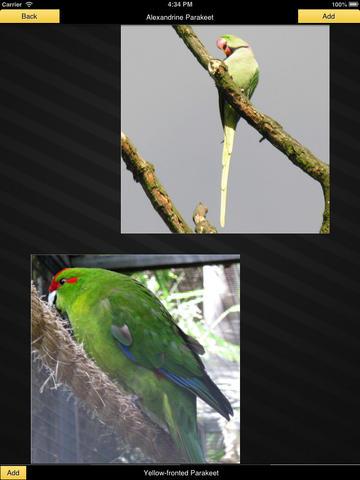Parrots - Gallery screenshot 8