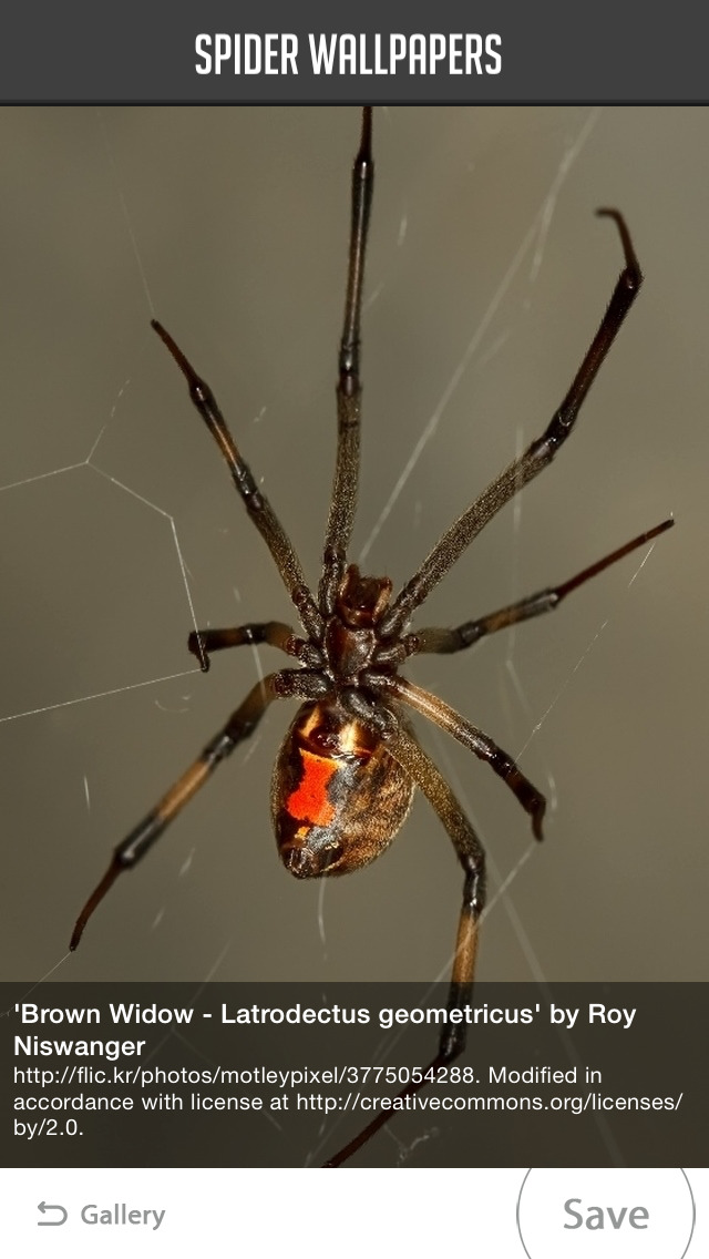 Spider Wallpapers screenshot 5