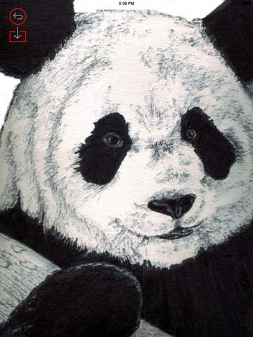 Best HD Panda Art Wallpapers for iOS 8 Backgrounds: Animal Theme Pictures Collection screenshot 7