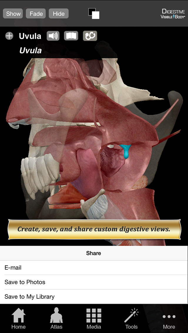 Digestive Anatomy Atlas: Essential Reference for Students and Healthcare Professionals screenshot 3