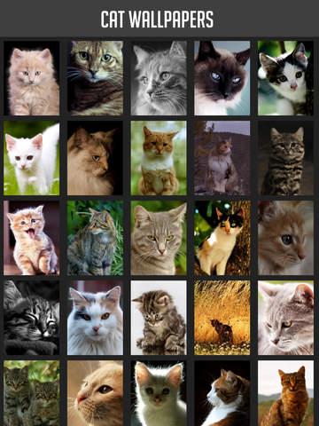 Cat Wallpapers! screenshot 6