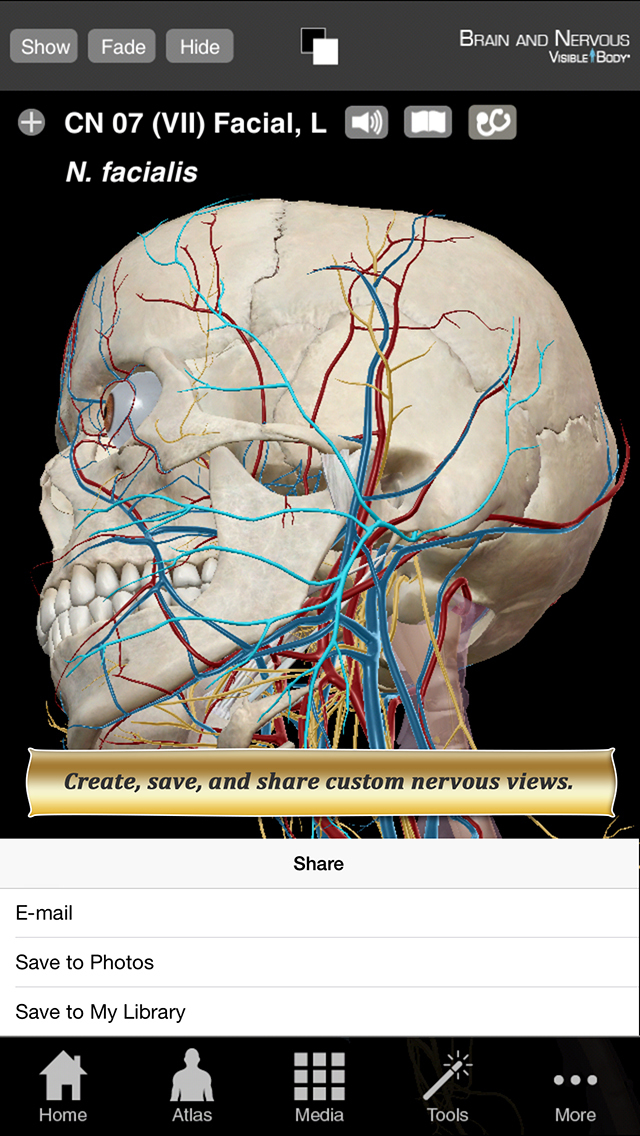 Brain and Nervous Anatomy Atlas: Essential Reference for Students and Healthcare Professionals screenshot 3