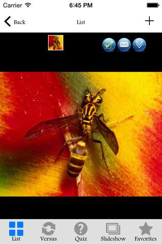 Insectarium Pro - náhled
