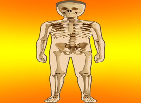 Body Parts - Internal screenshot 6
