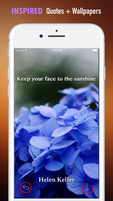 Hydrangea Wallpapers HD- Quotes and Art Pictures screenshot 5