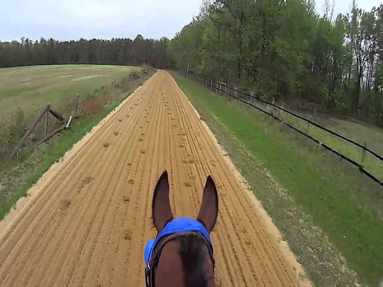 VR Horse Riding Simulator with Google Cardboard screenshot 4