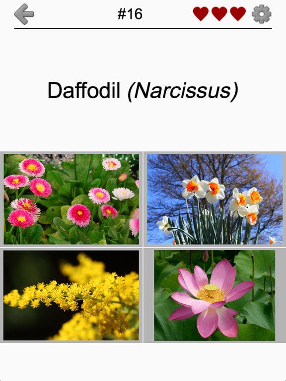 Flowers Quiz: Beautiful Plants screenshot 7