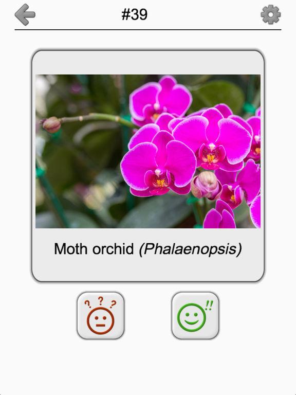 Flowers Quiz: Beautiful Plants screenshot 9
