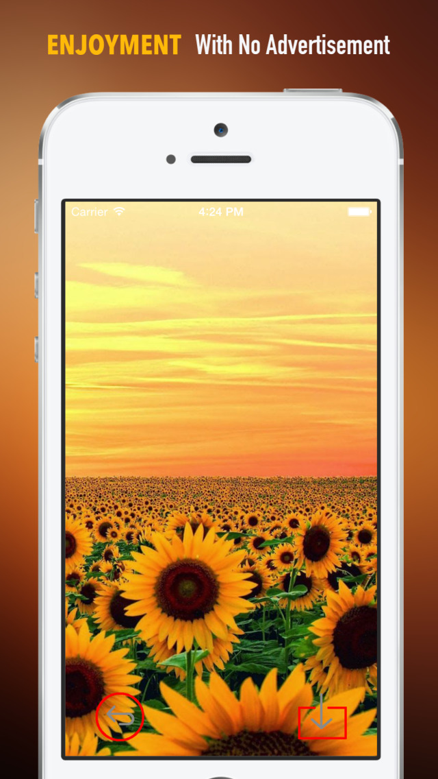 Sunflower Wallpapers HD: Quotes Backgrounds with Art Pictures screenshot 2