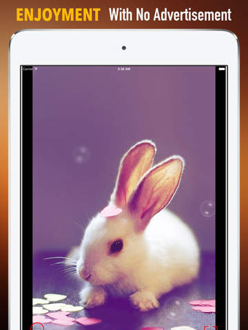 Rabbit Wallpapers HD: Quotes Backgrounds with Art Pictures screenshot 7