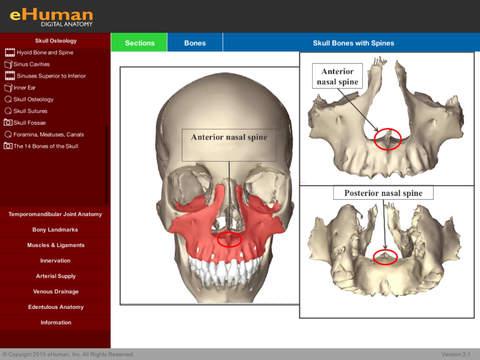 eHuman Head and Neck Anatomy - náhled