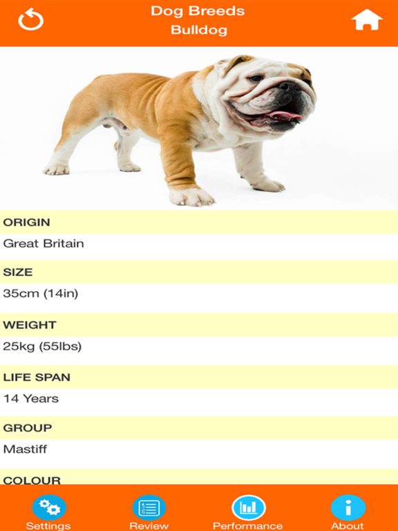 Dog Breeds Quizzes screenshot 10