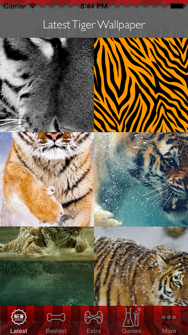 Best HD Tiger Art Wallpapers for iOS 8 Backgrounds: Wild Animal Theme Pictures Collection screenshot 1