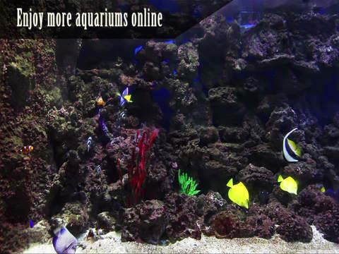 Peaceful Aquarium HD screenshot 8