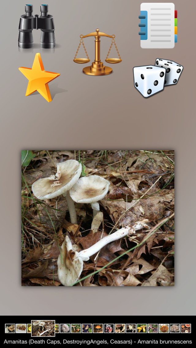 Mushrooms Info screenshot 2