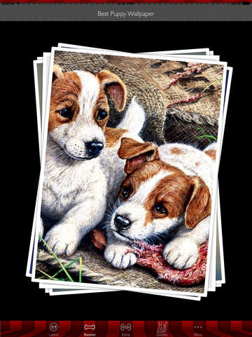 Best HD Puppy Art Wallpapers for iOS 8 Backgrounds: Animal Theme Pictures Collection screenshot 9