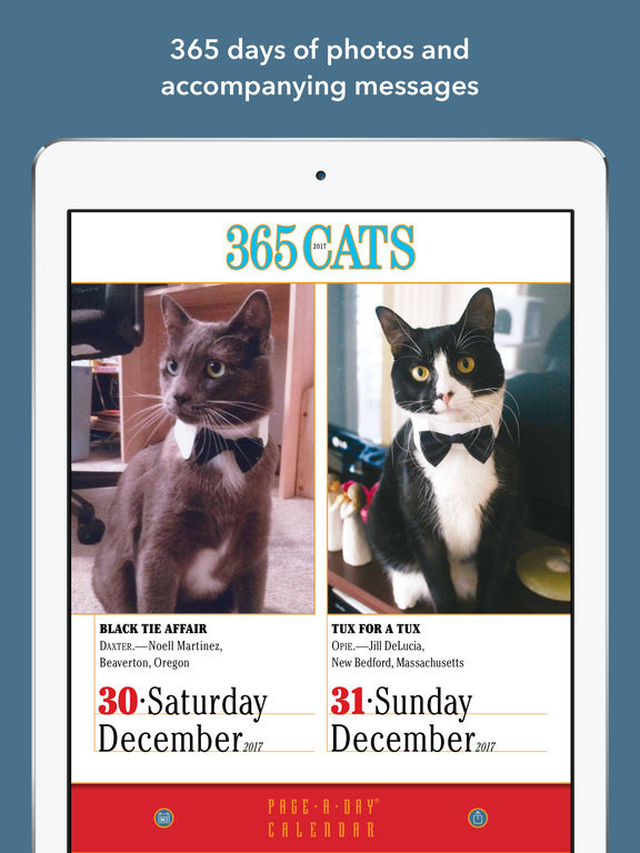 365 Cats Page-A-Day Calendar 2017 screenshot 8